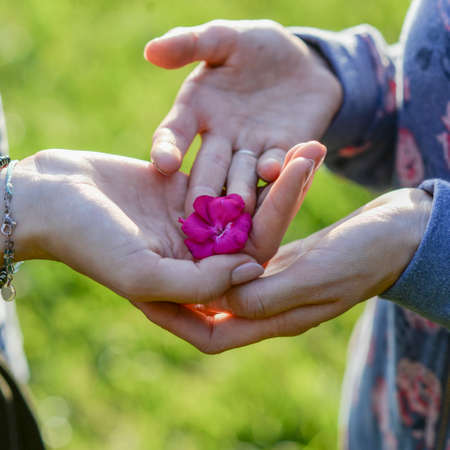Person lovingly placing a flower in the palm of a womans hand, green background. Stock Photo