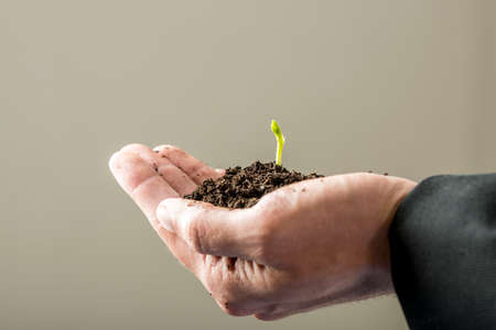 seed: Male hand holding a sprouting plant in rich fertile soil in a conceptual image.