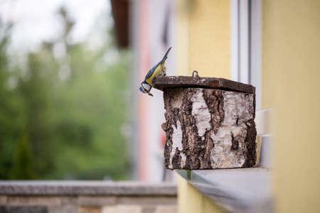 나무 중첩 상자에 서있는 작은 새는 측면에서 구멍 위쪽에 들여다 보며 집의 창 난간에 자리 잡고있다.