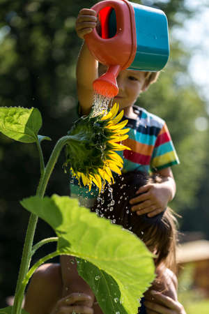Mother holding her toddler on shoulders as he waters a blooming sunflower with toy watering can. Focus to the flower.