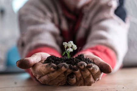 Front view of a man holding a soil with a white spring flower in his cupped hands, suitable for eco and bio concepts.