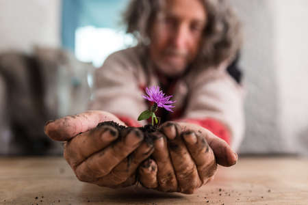 Older man holding out a small purple flower in a mound of rich dark earth in his hands over a rustic wooden table with focus to his hands in a conceptual image.