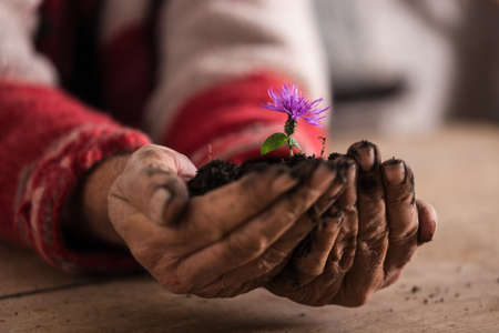 Man with dirty hands holding a purple flower cupped in his hand in soil, suitable for eco concept.