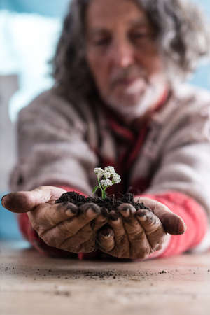 Senior man holding a dainty white flower in rich soil cupped in his dirty hands in a low angle view across a table with selective focus to his hands.
