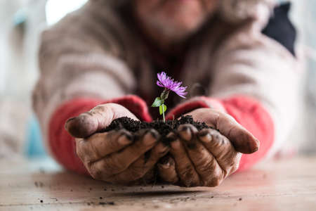 Man holding a purple flower in a soil in his hands, suitable for  life concepts.