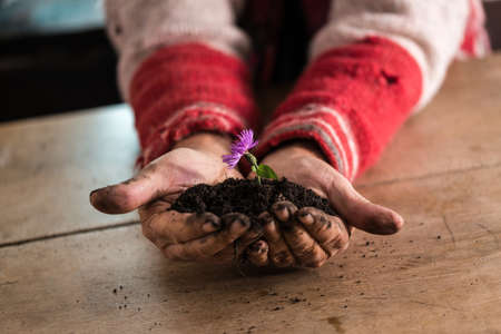 Gardener with dirty hands holding a dainty purple flower cupped in his hand in rich fertile soil over a rustic wooden table indoors.