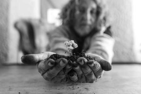 Old man holding a dainty white flower in rich soil cupped in his dirty hands in a greyscale image. 写真素材