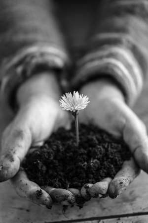 Gardener with dirty hands cupping dandelion in soil in his palms extending it towards the camera, greyscale image.