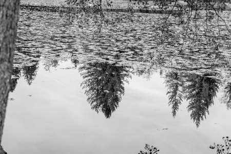 Tranquil scene of trees reflecting in lake in black and white image.