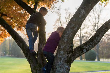 Two brothers climbing an autumn tree outdoors in a park with bright evening sun behind.