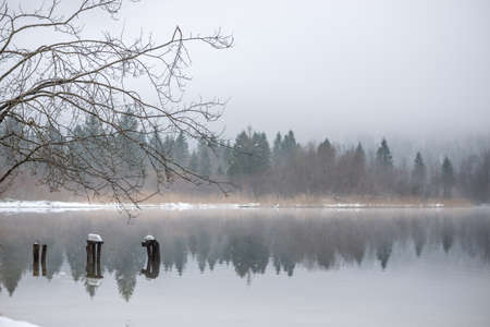 Decaying wooden piers in misty quiet lake with evergreen winter trees in background.