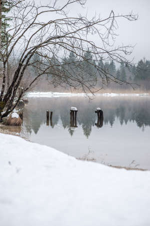 Decaying wooden piers in misty winter lake with evergreen forest in background.