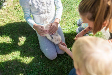 Top view of little furry pet rabbit siting in girls lap as her mother and brother lean in to pet it. Imagens