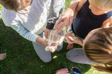 Top view of a family holding and petting their sweet pet rabbit outside on a grass. Banco de Imagens
