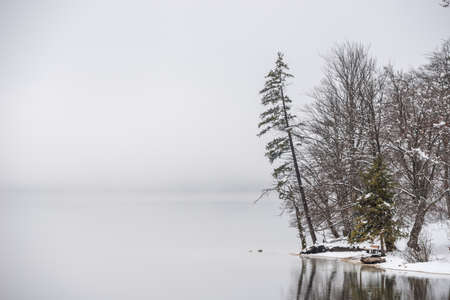 Winter lake Bohinj shore with trees and snow and fog above the lake.