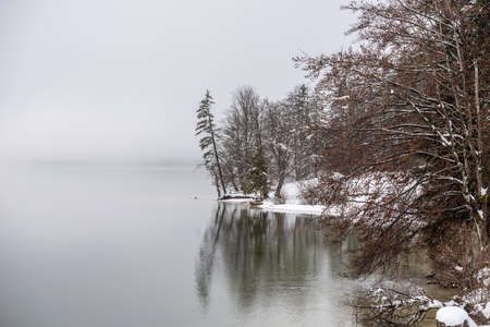 Winter snow covered shore of beautiful lake Bohinj with trees reflecting in the still water.