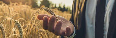 Wide view image of businessman carefully holding ripening ear of wheat in the palm of his hand standing in golden field. With retro filter effect.