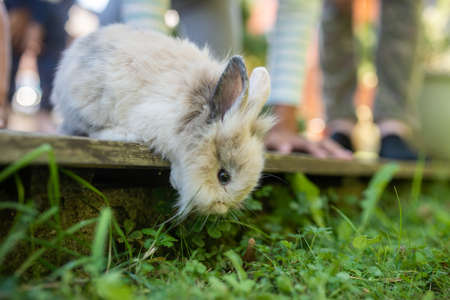 Cute little pet rabbit peeking from wooden terrace with his family owners legs in background.
