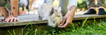 Wide view image of a hand of a child feeding pet baby rabbit as it curiously looks down from wooden terrace to reach fresh green grass. 스톡 콘텐츠