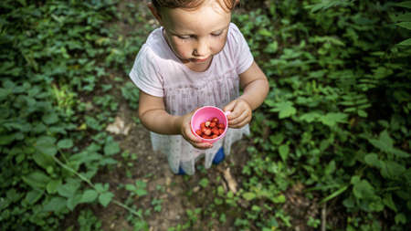 Overhead view of a toddler girl in pink dress holding a cup with wild strawberries standing on a forest footpath.
