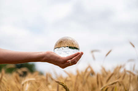 Female hand holding a crystal ball over ripening ears of wheat growing in summer with beautiful nature reflecting in the sphere.