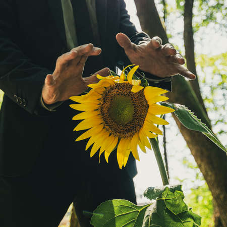 Businessman making protective gesture with his hands above a beautiful sunflower growing in the forest in a conceptual image. Stock fotó