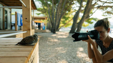 Young female photographer kneeling down to take a photo of a dove sitting on a wooden porch in holiday resort. Фото со стока