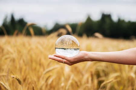 Female hand holding clear crystal ball in the palm with beautiful golden wheat field reflecting in it.