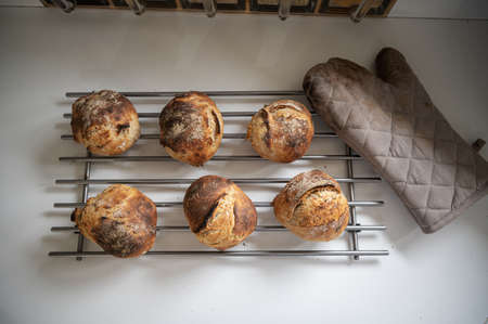 Top view of six freshly baked home made sourdough bread buns cooling on a rake on kitchen counter. Imagens