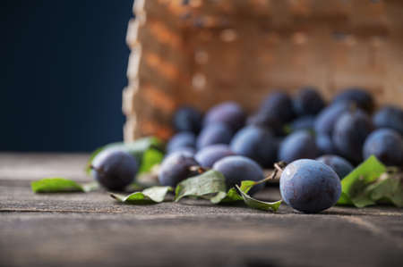 Low angle view of fresh home grown prunes scattered out of a wicker basket onto a rustic wooden surface.