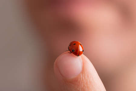 Closeup view of a beautiful red ladybug on a human finger.