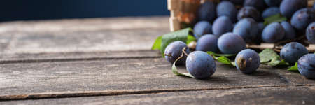 Wide view image of fresh juicy homegrown plums scattering out of a basket on rustic wooden boards with copy space on the left side of an image ready for your product. Imagens