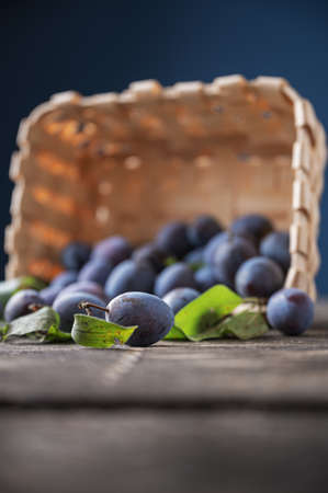 Low angle view of fresh homegrown juicy plums scattering out of a wicker basket.