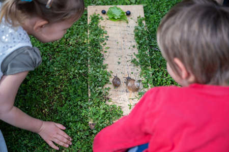 Two toddler children curiously looking at two snails going towards a lettuce leaf. Archivio Fotografico