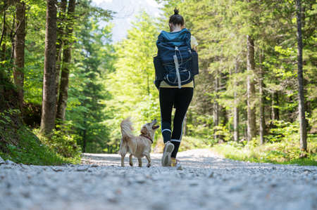 View from behind of a woman with a backpack hiking through beautiful green forest with her cute small dog.