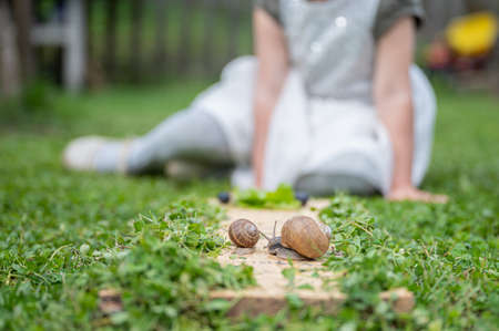 Two snails, small and big, on a wooden board placed on green grass with a blurred toddler girl in background observing the animals. 免版税图像