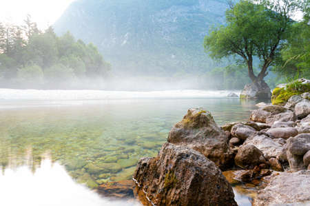 Beautiful soca river with mist above it and strong tree growing out of a rock on the shore.