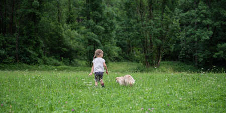 View from behind of a toddler girl walking with her dog in a beautiful summer meadow.