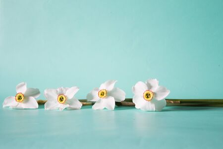 Flower frame made of narcissus on a neutral green background. Floral background.