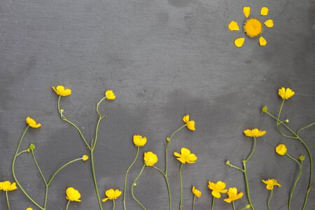 buttercups: Yellow buttercups and white chamomiles on stone background. Floral frame. Top view.