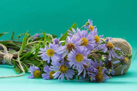 asters bouquet of violet flowers tied with string on a neutral green background. Stock Photo