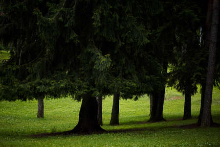 mighty: Beautiful Park with mighty green trees with nobody