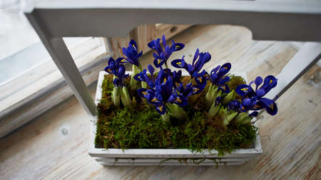 window sill: Blue irises in a white box with handle, stand on the window sill