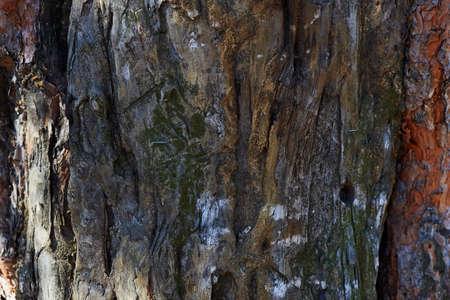 walnut tree: Old walnut tree trunk detail texture as natural background.