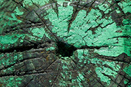 catchy: texture sawing logs on the longitudinal section showing the cut along the growth rings. The cut wood with cracks, painted in green and artistically crafted Stock Photo