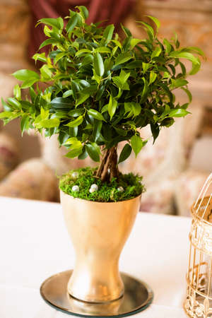 golden pot: Wedding floral design. The Golden pot is on the table