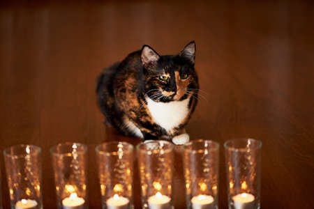 yin y yan: The cat with half black face, half red, sits and stares at the burning candles. Yin Yang