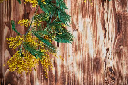 Mimosa, un simbolo di giorno delle donne sullo sfondo di legno marrone. Sfondo,