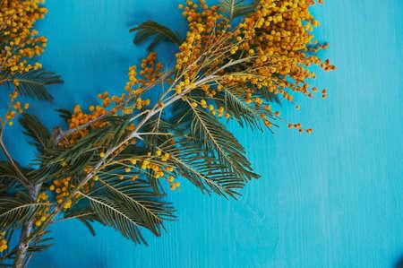 Mimosa, simbolo della donna e del risveglio della primavera. Su turchese
