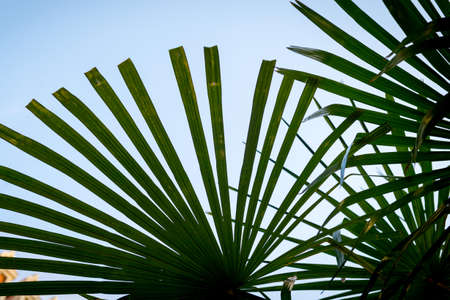 Palm leaves against the sky. A symbol of rest and holiday Stock Photo
